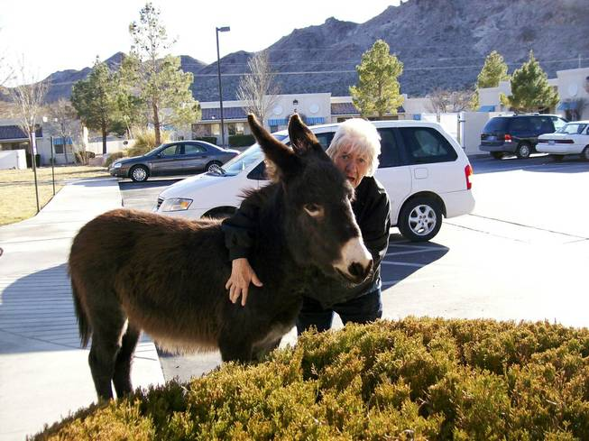 Betty J (BJ) Carter with a burro named Echo that is part of group of burros that are commonly seen roaming Beatty, NV.