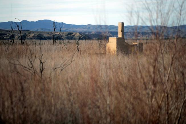 The remains of a building is seen through the tamarisk weeds that have grown over the site of the lost town of St. Thomas. The town was founded by Mormon settlers in 1865,  but was abandoned to the rising waters of Lake Mead in 1938.