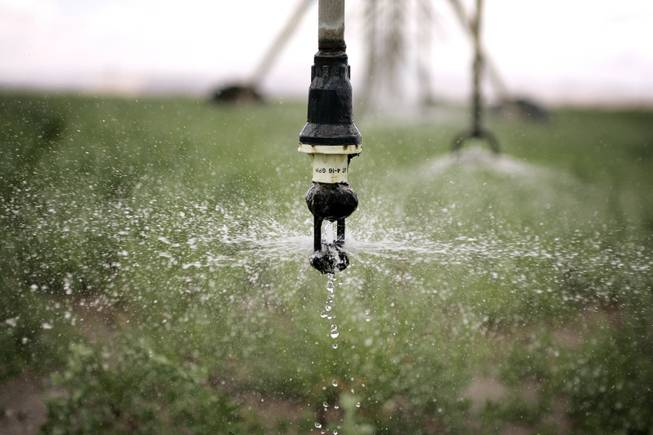 A Nevada alfalfa field gets watered on Friday, June 6, 2009.