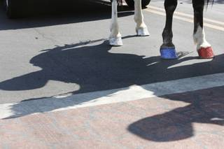 Manicured hooves are seen on a horse walking in the 60th annual Damboree parade in Boulder City.
