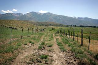 Part of the 40 acres of land owned by Governor Jim Gibbons in Lamoille, Nevada. The governor bought the land from Jerry Carr Whitehead and has leased it back to him for cattle grazing in order to save money on property taxes.