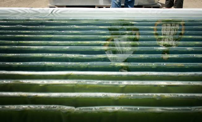Solix Biofuels employees Pete Hentges and Tracy Yates are reflected in an algae pond at company affiliated with Colorado State University. When harvested, algae can be made into biodiesel fuel. The university has taken aggressive steps to commercialize its research results.