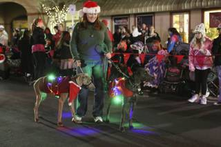 A member of the Las Vegas Weimaraner Club and Rescue walks blinking weimaraners down Nevada Way during the 37th annual Santa's Electric Light Parade in Boulder City Dec. 6.