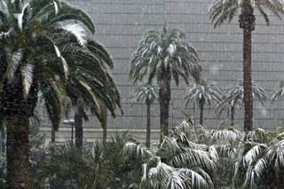 Snow collects on trees at the Luxor on the Las Vegas Strip on Wednesday.