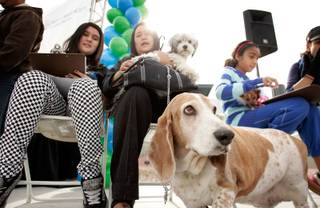 Droopy, bottom right, waits with his owners Terra Facciola, left, 12, and her mother Atsuko Facciola, with their other dog Shaggy, to get a free check-up for their dogs at Lied Animal Shelter  on Sunday, Feb. 15, 2009 as part of an event to kick off the