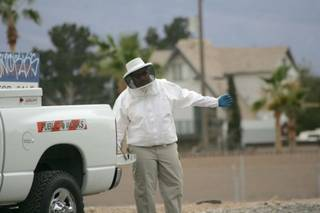 A beekeeper evaluates a site near Spencer Street and Eldorado Lane after a colony of Africanized bees was disturbed March 21.