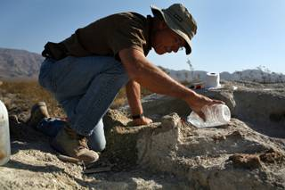 Excavation technician for the San Bernardino County Museum, Quintin Lake, adds water to soften the soil while working on uncovering body parts of a Columbian Mammoth in the upper Las Vegas wash in North Las Vegas on Thursday Aug. 13, 2009.