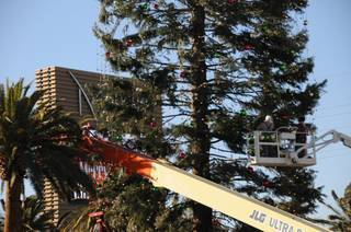 Workers at M Resort decorate the 109-foot Christmas tree before the Dec. 12, 2009 tree lighting. M Resort says the tree is the tallest cut Christmas tree in the nation this year.