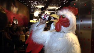 FEATHERED FEUDING: Rooster-costume clad bar patrons at Tacos & Tequila at the Luxor compete each Wednesday evening,