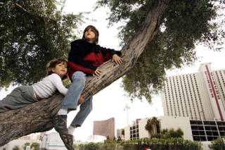 Brothers  Justin Sawczuk, 7, and Marcus Sawczuk, 2, of Hollywood, Fla., climb a tree near their RV site on March 31 at the Las Vegas KOA at Circus Circus. Their mother, Celia, said she enjoyed the fact that the park offered a site with grass, trees and shade, an amenity rarely offered at urban RV parks.