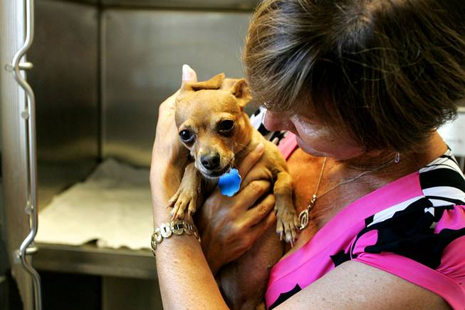 Peggy Tauber hugs her dog Kelly after cleaning her cage at Noah's Animal House before heading out to look for work Tuesday, July 13, 2010. Noah's Animal House provides housing for the pets of women who are staying at Shade Tree Shelter.