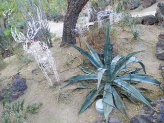 The holiday lights display at Ethel M's cactus garden will automated reindeer grazing throughout its plants. The holiday cactus garden opens Tuesday. Admission is free.