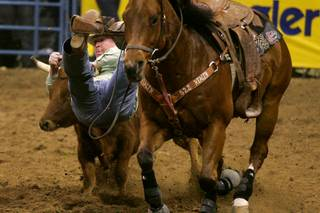 Steer wrestler Kyle Hughes dismounts during the first go round of the National Finals Rodeo Thursday, December 2, 2010 at the Thomas & Mack.