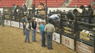 Horses are prepped for a ride across the South Point Equestrian and Event Center floor as part of Benny Binion's World Famous Bucking Horse and Bull Sale.
