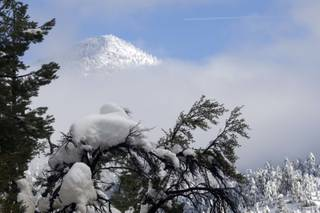 Snow hangs on a branch near the Echo Canyon subdivision in Kyle Canyon on Thursday. Metro search and rescue officers evacuated residents from the area due to an avalanche threat. Areas of Kyle Canyon received between 37 and 90 inches of snow from the recent storm.