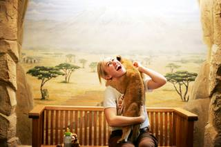 Trainer Katie Massey exclaims as an 8-week-old lion licks her ear at the Lion Habitat at MGM Grand in Las Vegas on Friday, June 17, 2011.