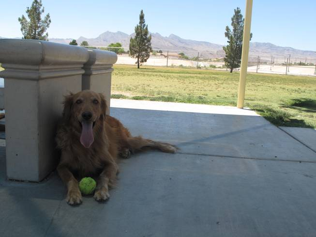 Barkin' Basin Dog Park is one of the largest dog parks in the valley, with three fenced runs spanning 8 acres.