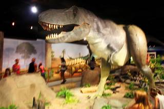 The animatronic T-Rex dinosaur shakes his head during the 20th anniversary celebration at the Las Vegas Natural History Museum Saturday, July 16, 2011.