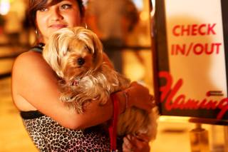 Martha Ramirez of San Diego stands with her Yorkie, Bella, in the lobby of the Flamingo on Thursday, Aug. 11, 2011. Caesars Entertainment has launched a PetStay program across its Las Vegas resorts that includes dog-friendly rooms, doggy treats and relief areas.
