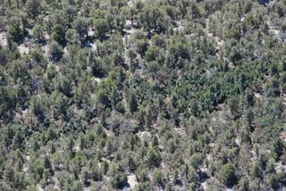 Authorities discovered the 4-acre marijuana cultivation site on Mount Charleston in the Deer Creek area, between Kyle and Lee canyons. Crews airlifted the 4,685 plants out of the site Wednesday.