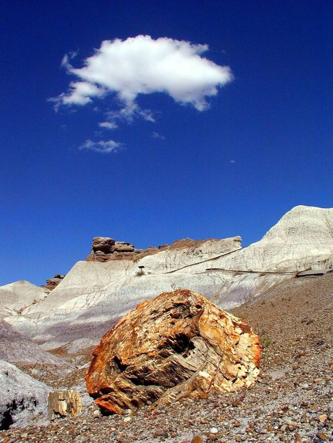 Petrified Forest in northeast Arizona.