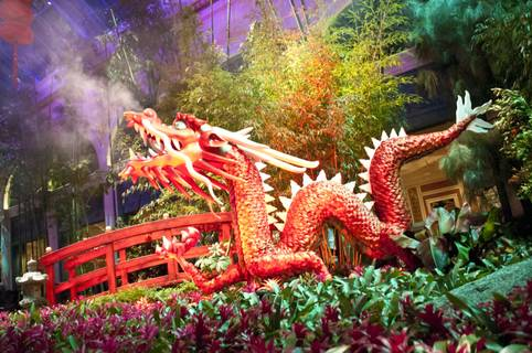 Bellagio Conservatory: Chinese New Year 2012