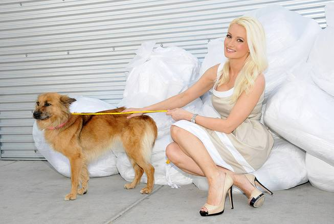 Holly Madison at the Animal Foundation's 9th Annual Best in ...