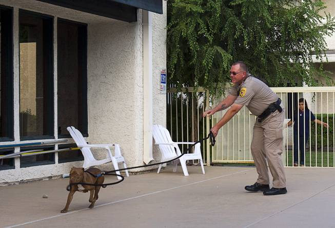 Clark County Animal Control Officer Darryl Duncan lassos a stray pit bull in the pool area of an apartment complex on East Charleston Boulevard Thursday Sept. 20, 2012. Duncan used the rope when the dog did not come to him voluntarily.