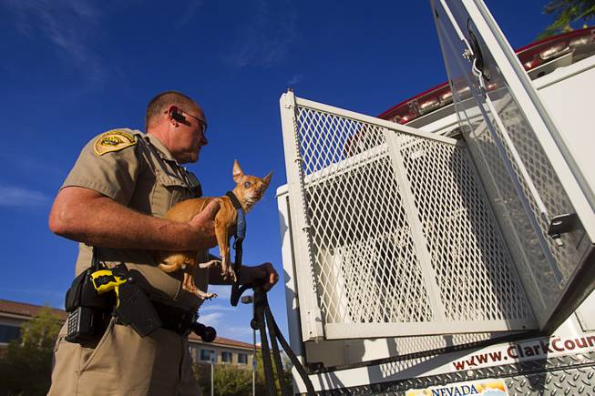 Clark County Animal Control Officer Darryl Duncan loads a blind Chihuahua into his truck Thursday Sept. 20, 2012. Duncan was called to pick up the dog from an assisted living facility after the owner died.