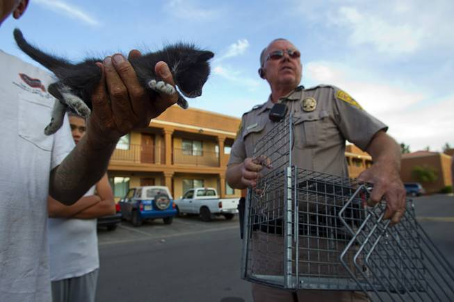 Darryl Duncan, a Clark County animal control officer, picks up a kitten from an apartment in the northeast part of the valley Thursday Sept. 20, 2012. The kitten was found in the wall of the maintenance room, said Manny Vasquez, a maintenance supervisor.