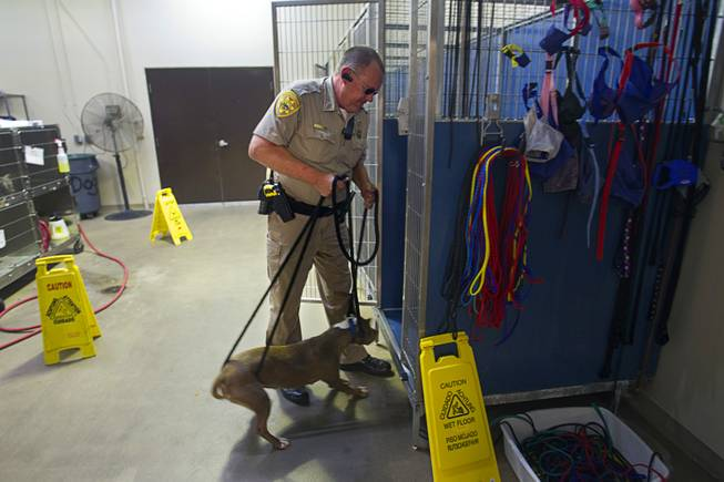 Darryl Duncan, a Clark County animal control officer, puts a stray pit bull into a cage at the Lied Animal Shelter Thursday Sept. 20, 2012.