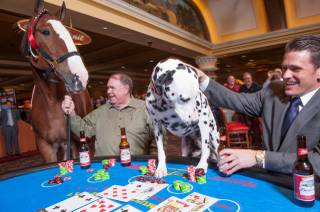 South Point GM Ryan Growney, in the suit, and South owner Michael Gaughan play blackjack with a Clydesdale named Elite and a Dalmatian named King at South Point on Friday, Oct. 12, 2012.