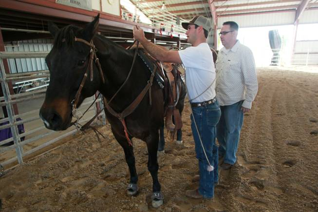 UNLV rodeo cowboy Tyler Mitchell gets Anson ready for Las Vegas Sun sports editor Ray Brewer Nov. 2, 2012.