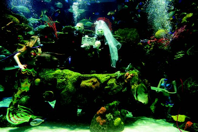 Underwater wedding in salt-water aquarium at the Silverton.