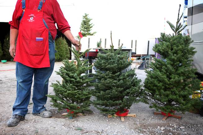 Tree lot attendant Rick Moore shows off some smaller trees for sale at Frosty's Christmas Trees in Las Vegas on Thursday, November 29, 2012.