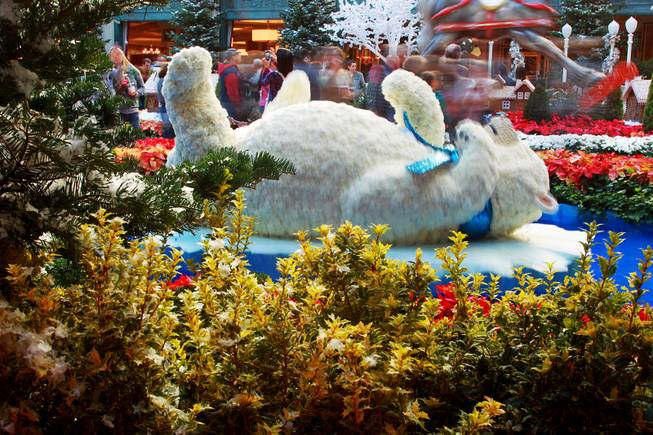 A polar bear rocks in a pond in the holiday display at the Bellagio Conservatory & Botanical Garden Friday, Dec. 7, 2012.