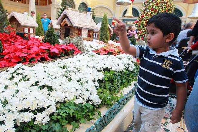 Dhruv Shastry from Washington, D.C. watches a toy train at the holiday display in the Bellagio Conservatory & Botanical Garden Friday, Dec. 7, 2012.