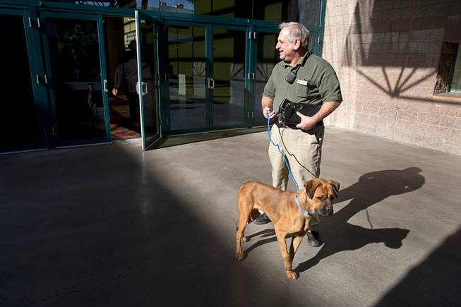 MGM electronic technician Jeff Lambert leaves the 5th annual Charlie's Angels Pet Adoption Fair with a new dog at the MGM Grand Garden Arena Monday, Dec. 11, 2012. The boxer mix was named Angel but Lambert said he would probably rename the dog after a deli sandwich. He already has a dog named Reuben after the Reuben sandwich, he said.