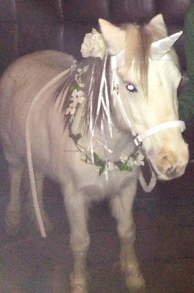 "This ""unicorn"" made brief appearance Wednesday night at a birthday party for Zappos CEO Tony Hsieh."