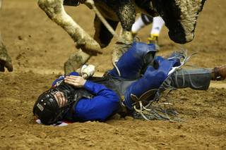 Bull rider Clayton Savage of Casper, Wyo. is nearly stomped on after being thrown from his bull during the final night of the Wrangler National Finals Rodeo Saturday, Dec. 15, 2012.