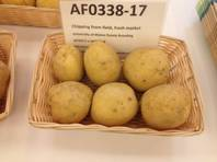 These potatoes from Maine are cultivated to make chips. They are one of the new varieties of spuds on display this week at the Potato Expo at Caesars Palace in Las Vegas.