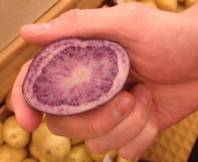 The Purple Valley potato from Idaho is one of the new varieties of spuds on display this week at the Potato Expo at Caesars Palace in Las Vegas.