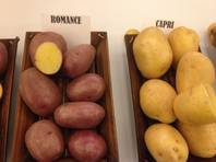 The Romance and Capri potatoes are yellow varieties from Canada among the spuds on display this week at the Potato Expo at Caesars Palace in Las Vegas.