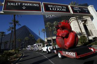 BODIES... The Exhibition and the American Heart Association welcome a 600 pound heart sculpture to the Luxor Resort & Casino on February 1, 2013 in Las Vegas, Nevada.