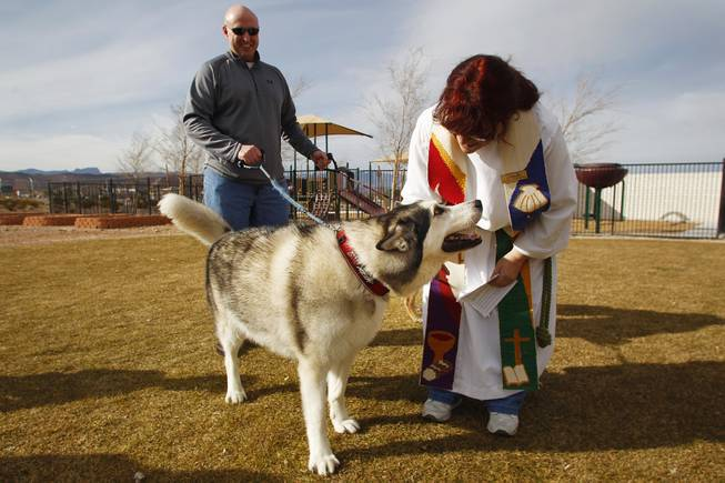 "Pastor Collette Paul gives a blessing to Jake, a malamute held by Joe Papez during a ""Blessing of the Pets"" Saturday, Feb. 2, 2013 at Good Samaritan Lutheran Church"