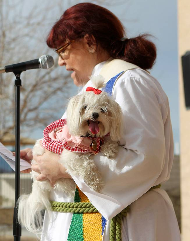"Pastor Collette Paul holds her dog Angel while delivering a scripture reading during a ""Blessing of the Pets"" Saturday, Feb. 2, 2013 at Good Samaritan Lutheran Church."