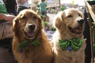 Luce, left, and Otter wear their green bow ties during the St. Patrick's Day Parade in downtown Henderson, Saturday, Mar. 16, 2013.