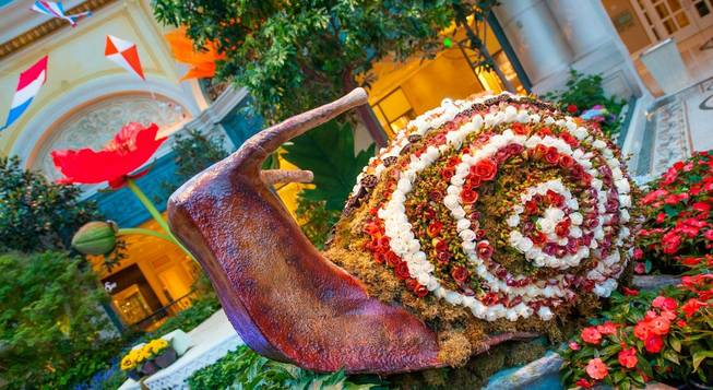 The Bellagio Conservatory & Botanical Gardens' 2013 summer display photographed ...