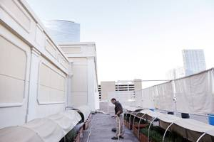 Gardener Michael Fearon tends to the rooftop herb garden at the Bellagio on Monday, June 17, 2013.