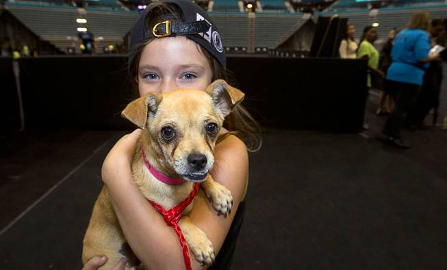 Hailey Horrowitz, 8, poses with her new dog during the annual Charlies Angels Pet Adoption Fair at the MGM Grand Garden Arena Thursday, July 11, 2013. Scott Sibella, president/COO of MGM Grand, and his wife Kim picked up the adoption fees for any MGM employee that wanted to adopt a dog or cat.